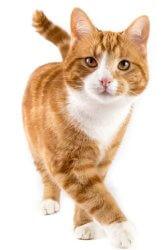 Spezialreiniger Katzenurin - Bild Katze