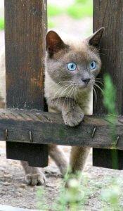 Katzen ferhalten mit Fernhalte-Spray